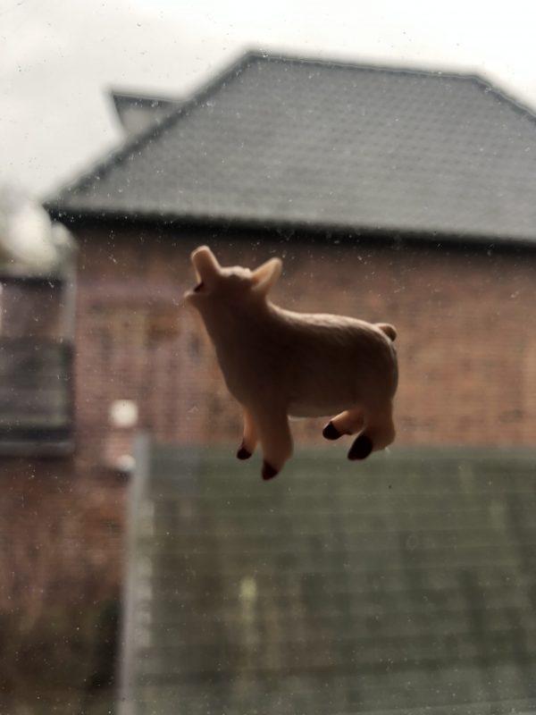 Das Schwein kräht auf dem Dach
